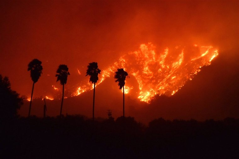 Wildfire and palm trees