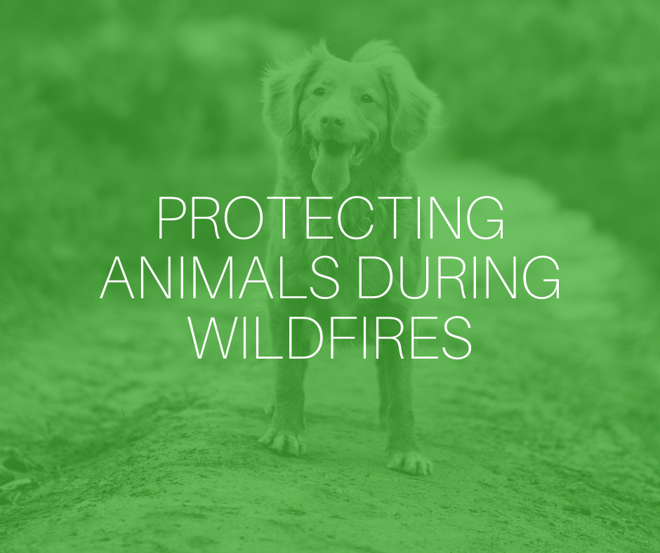 Protecting animals during wildfires